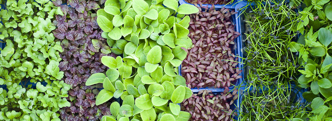 Koppert Cress uses new hot water storage that lowers CO2 emissions