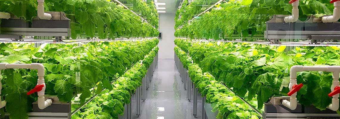 Podcast | Vertical and Urban Farming