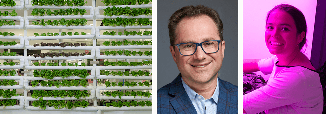 VIDEO: How to optimise plant growth in a vertical farm