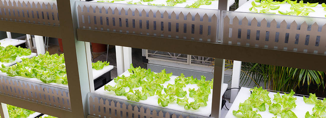 H2hydroponics to implement hydroponic growth with Green Greenland